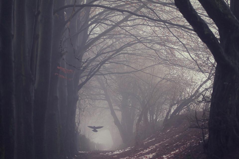 Vogel, Wald, Abflug, Herbst