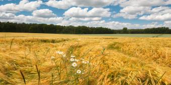 Summer Field © Michael Breitung