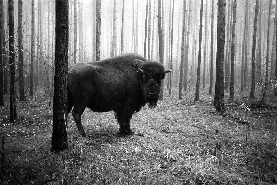 tierwald002 © Frank Machalowski