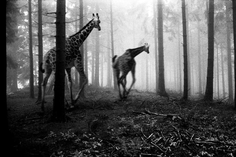 tierwald003  © Frank Machalowski