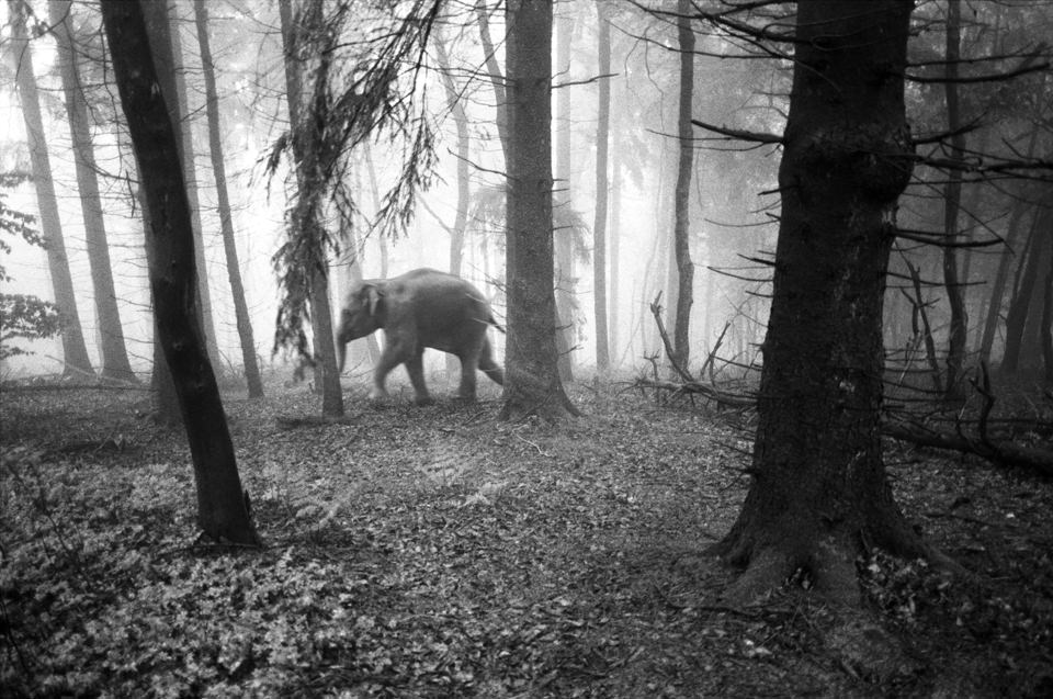 tierwald004  © Frank Machalowski