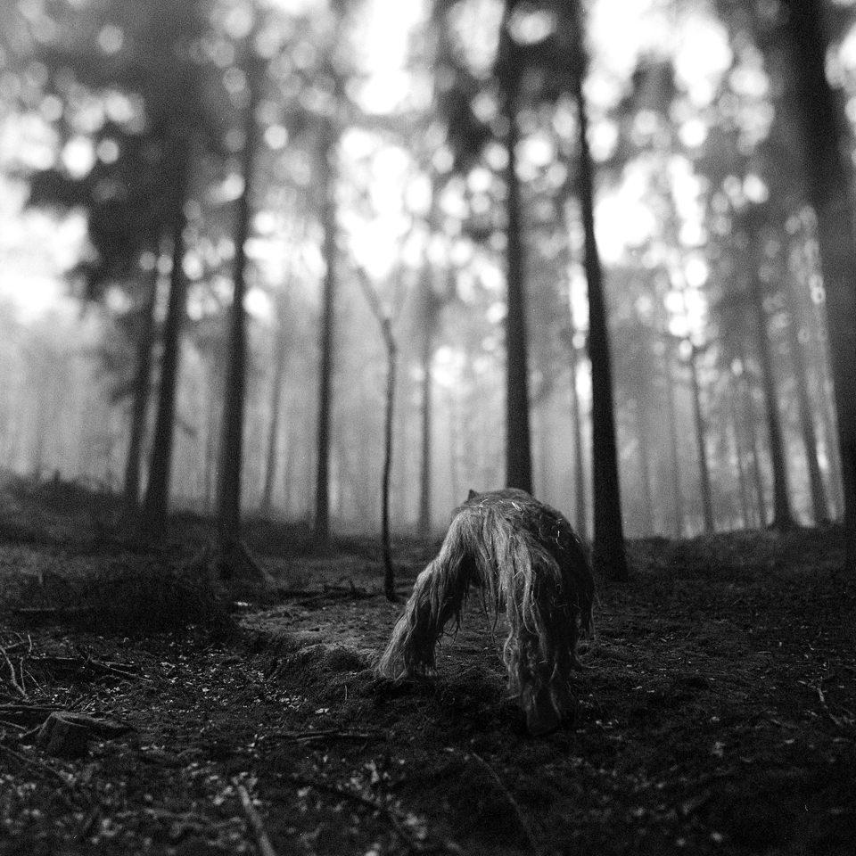 tierwald005  © Frank Machalowski