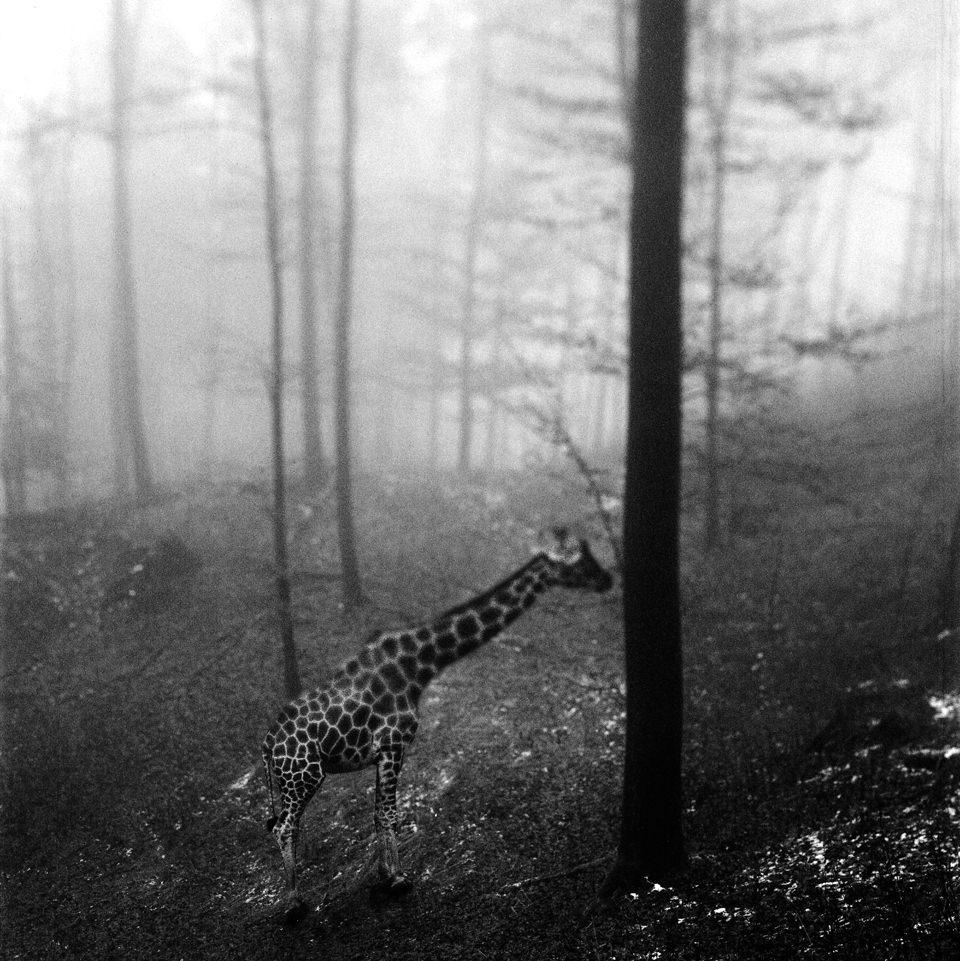 tierwald006  © Frank Machalowski