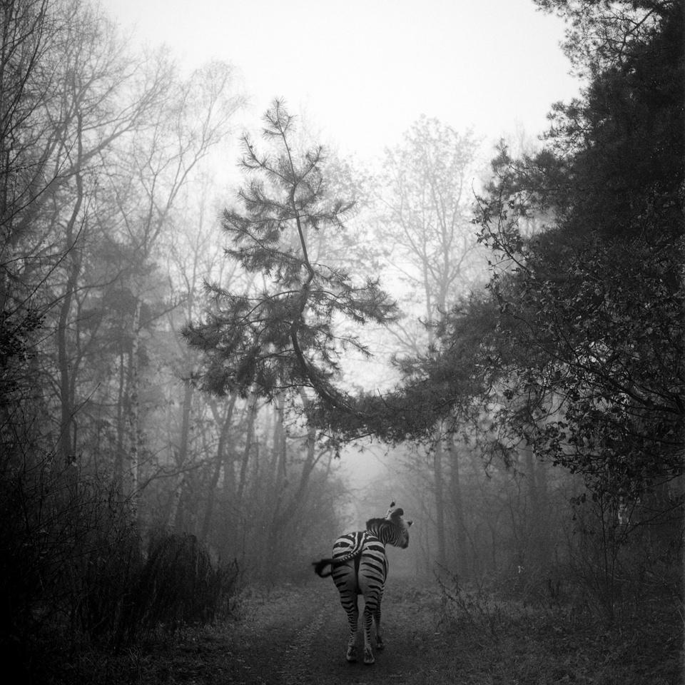 tierwald007  © Frank Machalowski