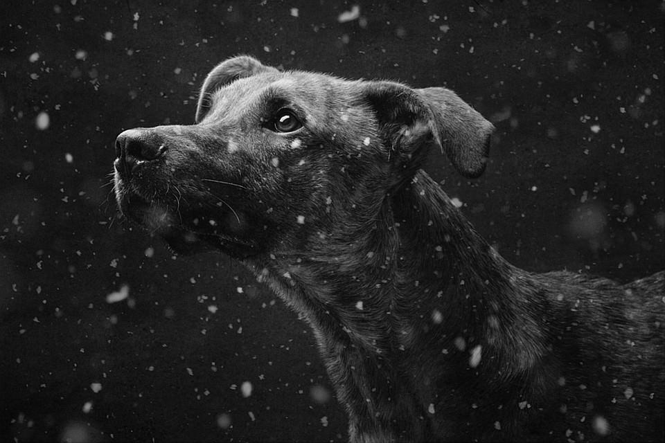 Hund, Schnee, Winter