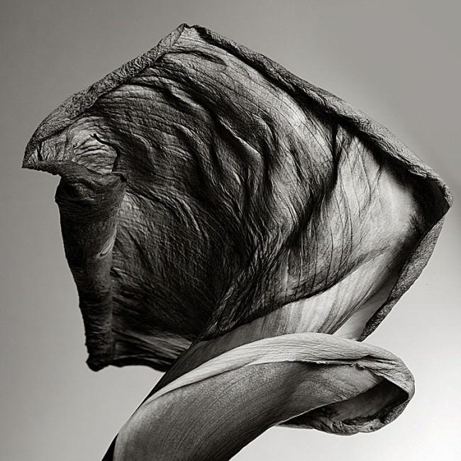 © Jorge Schramm