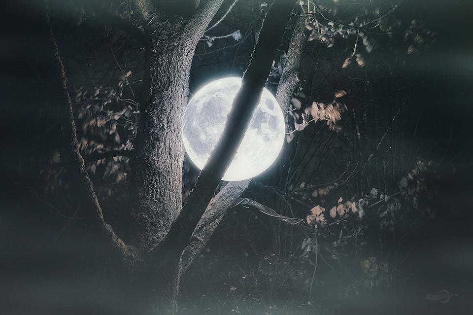 Mond, Baum, Blätter, Montage