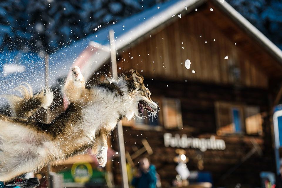 Hund, Flug, Schnee