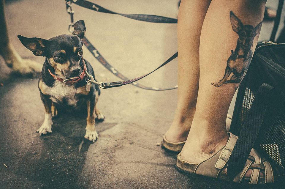 Hund, Beine, Augen