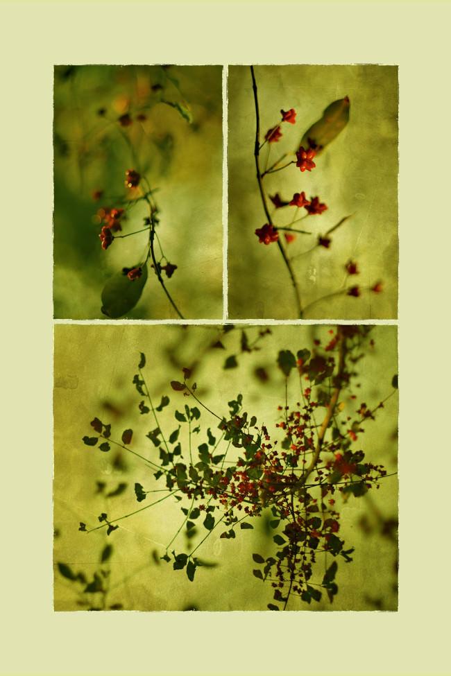 in Seclusion © Iwona Drozda-Sibeijn