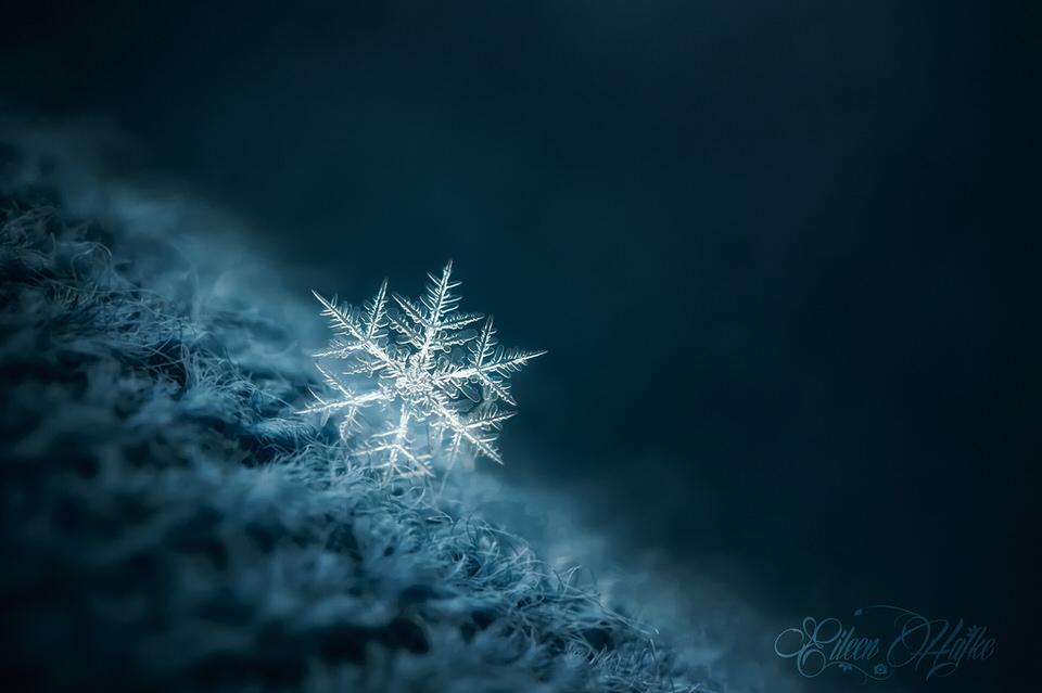 Schneeflocke, Makro, Nahaufnahme,
