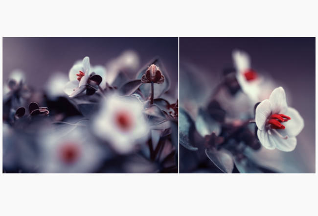 sentient © Iwona Drozda-Sibeijn