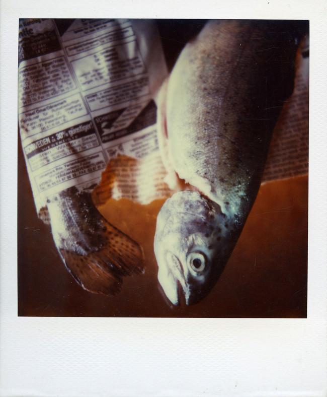 Fisch © Peter Breuer