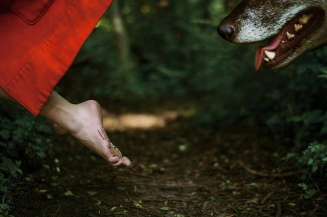 Wolf © Laura Zalenga