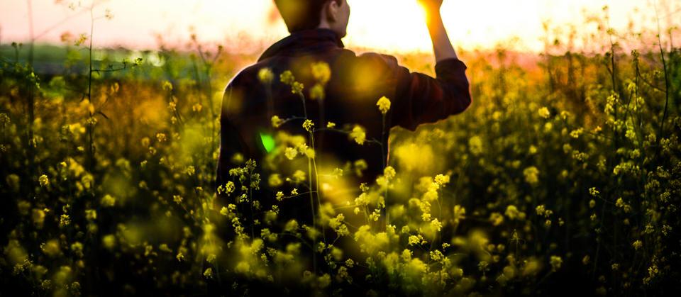 Mensch, Mann, Feld, Blüte, Blumen, Sonnenuntergang