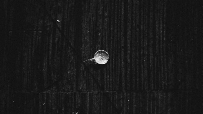 white mystery © Grit Schamass