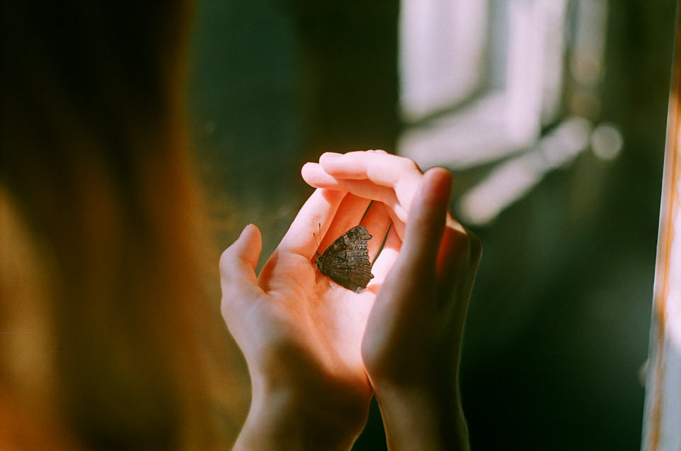 Frauenhände halten einen Schmetterling ins Licht