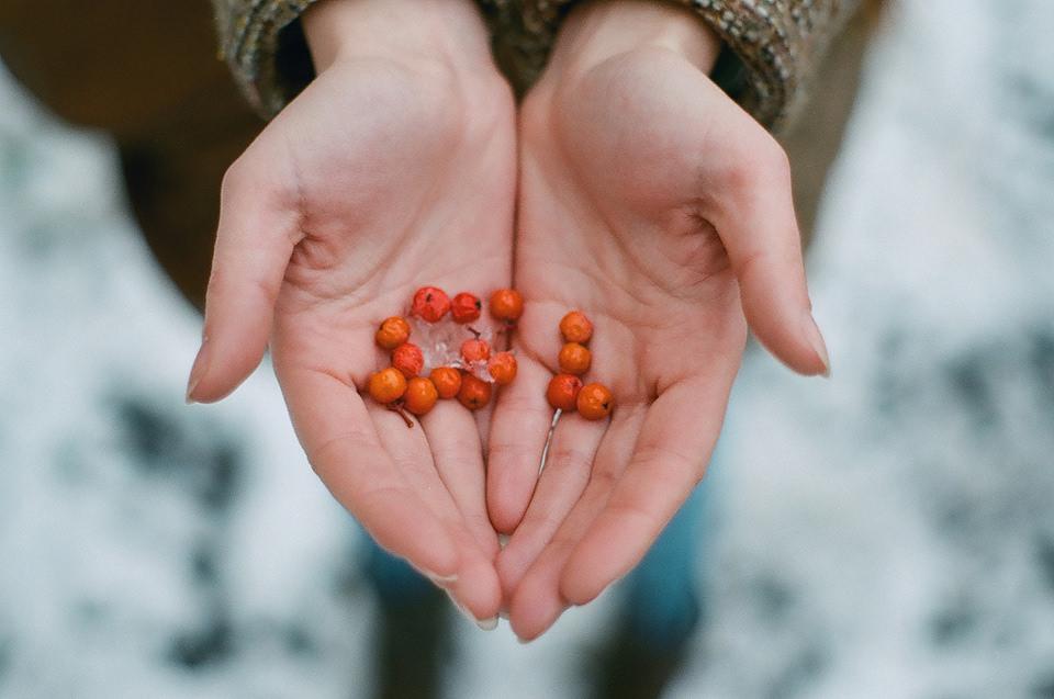 Blick von oben in zwei Hände, die Beeren halten.