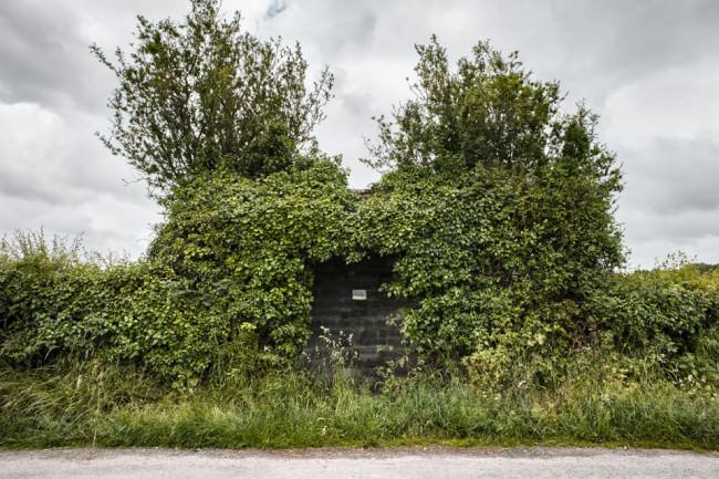 Eine Bushaltestelle, vor lauter Pflanzen fast nicht zu erkennen