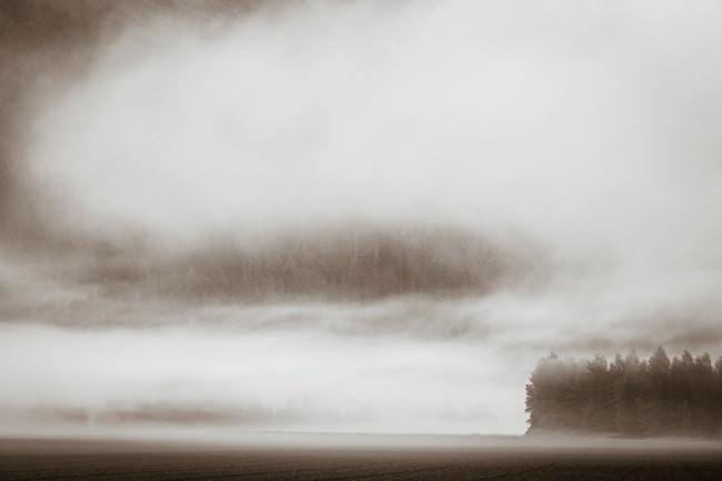 Eine Landschaftsfotografie, die zeigt, wie ein Wald von Wolken eingenommen ist.