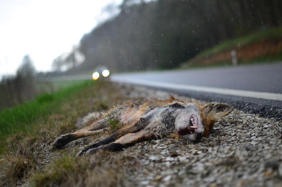 Hunting Season © Rebecca Schwarzmeier
