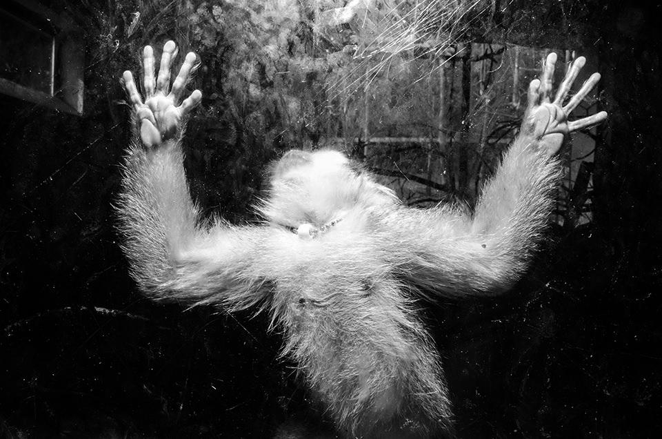 Ein Affe am Fenster.