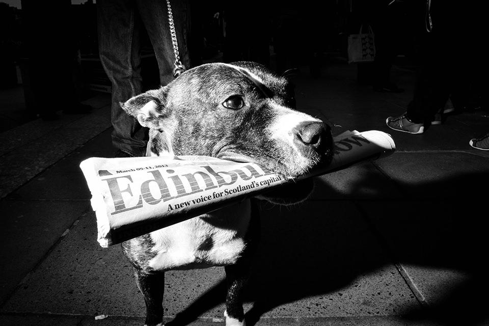 Ein angeblitzter Hund mit Zeitung im Maul.