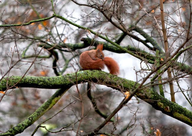 Ein Eichhörnchen pflegt sein Fell.