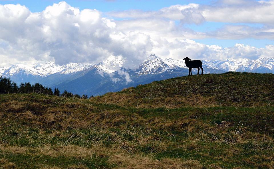 Die Silhouette eines Lamms zeichnet sich vor einem Gebirge ab.