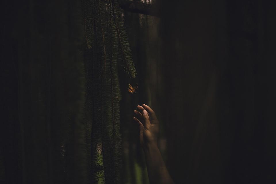Eine Hand greift nach einem Schmetterling.