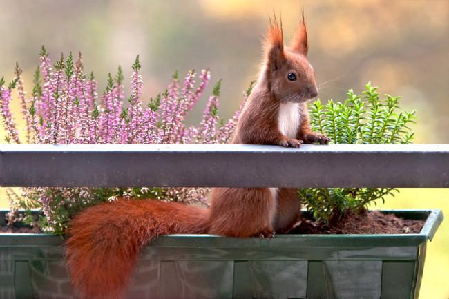 Ein Eichhörnchen sitzt in einem Blumenkasten.
