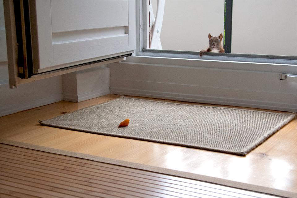 Ein Eichhörnchen wartet an der Tür