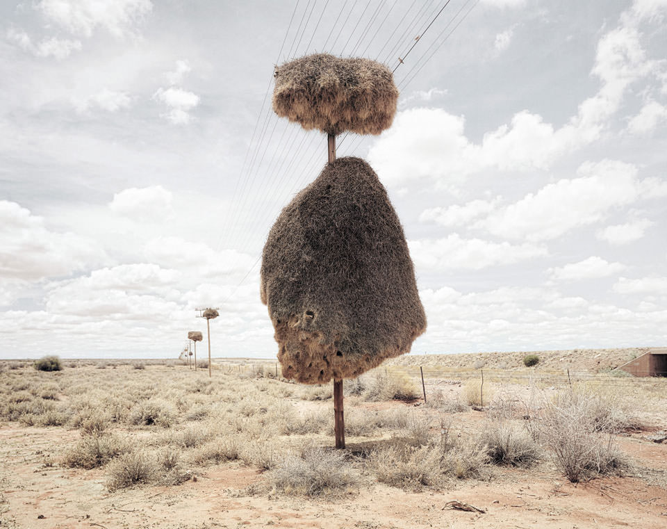 Assimilation © Dillon Marsh