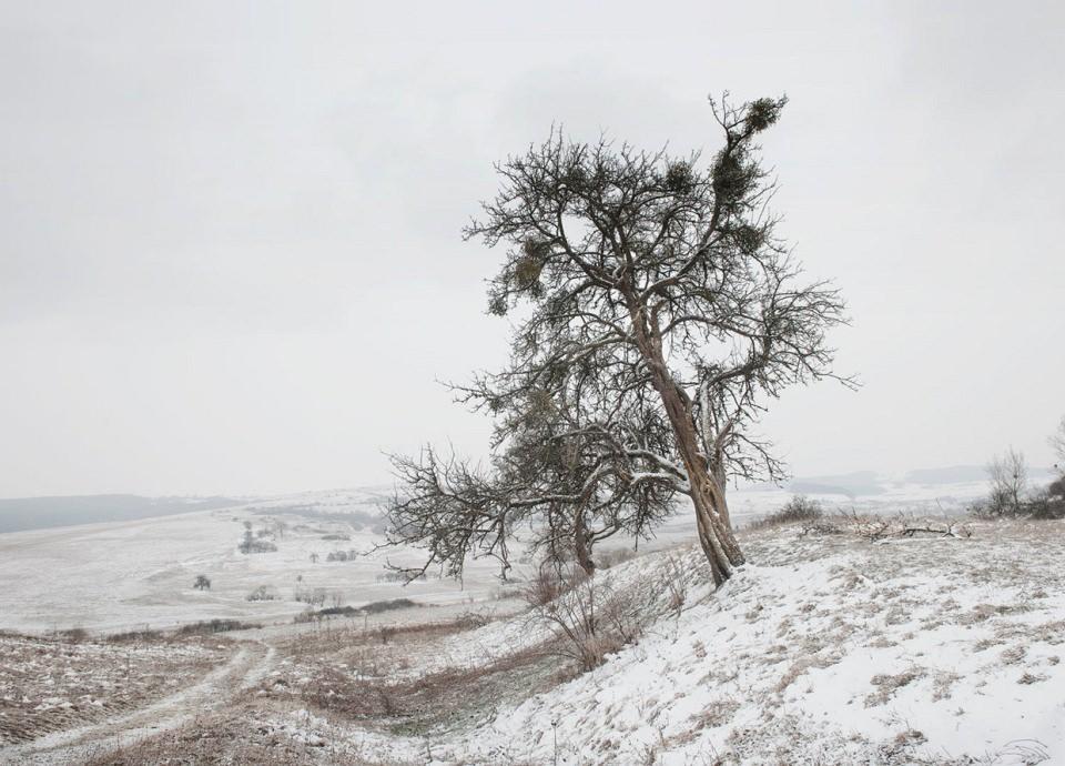 Schneelandschaft mit Blick in ein Tal voller Felder, im Vordergrund ein knorriger Baum an einem kleinen Hang.