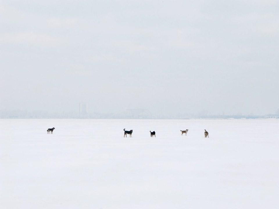 Fünf Hunde stehen verloren in einer sehr weiten, weißen Schneelandschaft.