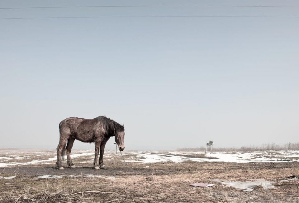 Ein einzelnes Pferd steht vor einer weiten Feldlandschaft mit etwas Schnee.