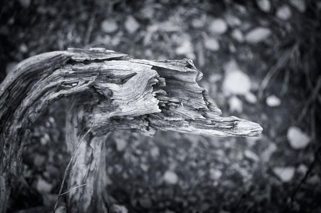 Dead Tree 1 © Sebastian Baumer