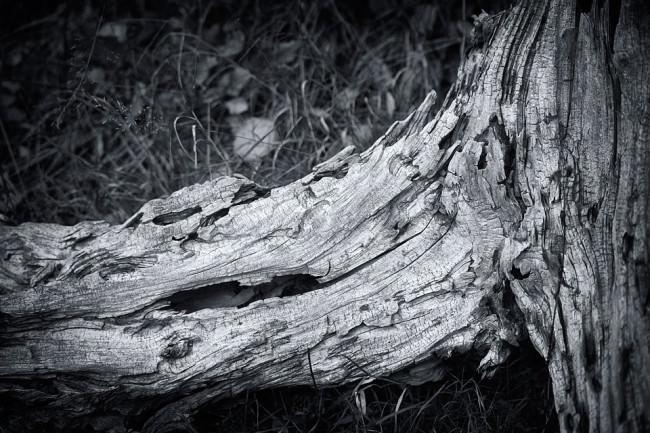 Dead Tree 3 © Sebastian Baumer