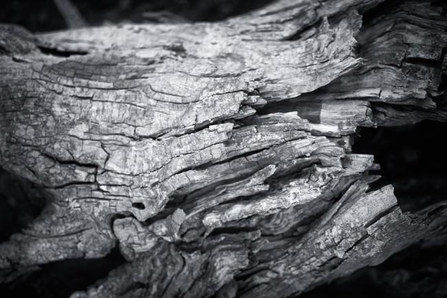 Dead Tree 4 © Sebastian Baumer