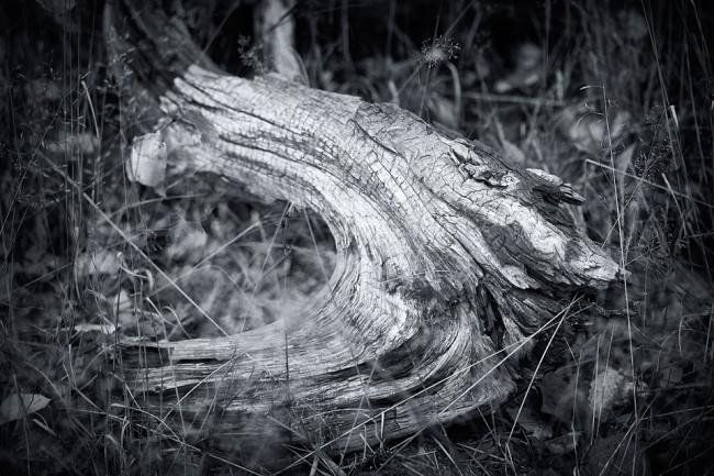 Dead Tree 5 © Sebastian Baumer