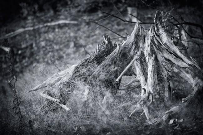 Dead Tree 9 © Sebastian Baumer