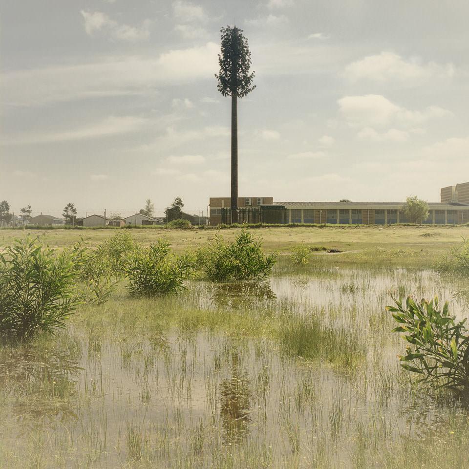 Invasive Species © Dillon Marsh