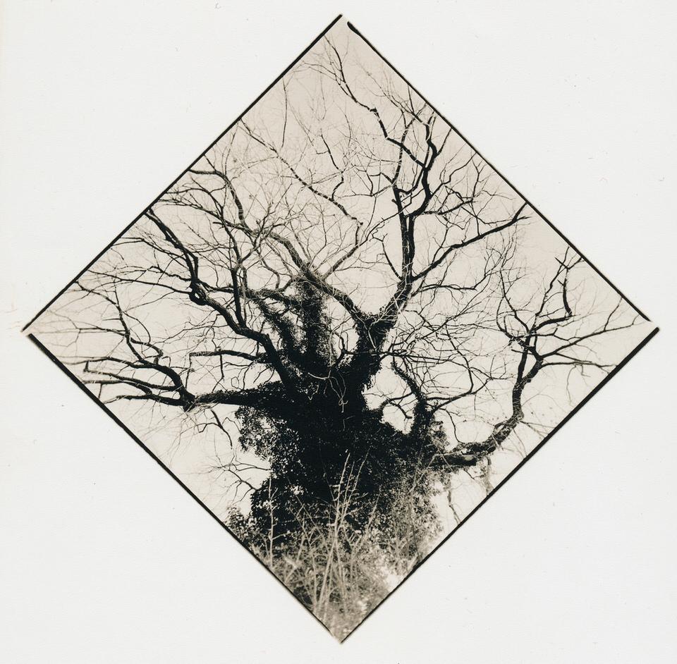 Ein Baum, von unten fotografiert. Naturfotografie.
