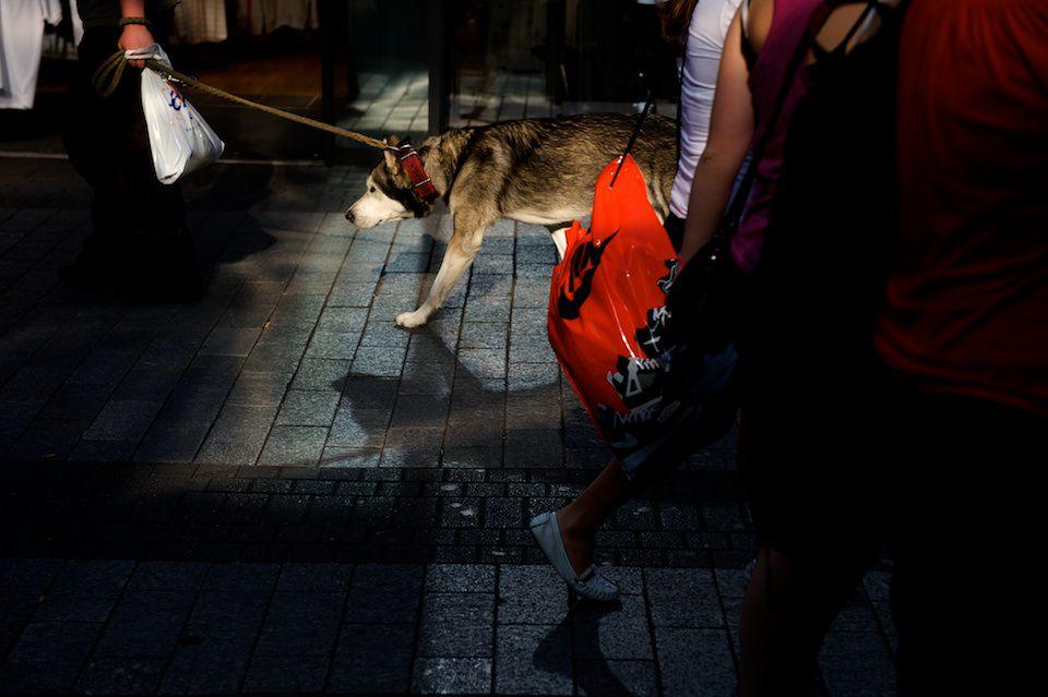 Straßenfotografie: Licht und Schatten, ein Hund tritt deutlich hervor.