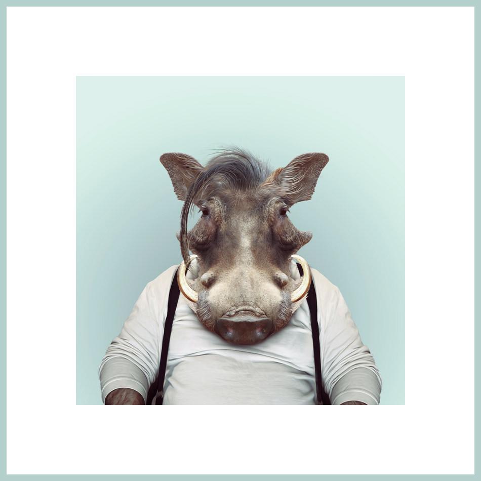 Ein Warzenschwein mit Hosenträgern