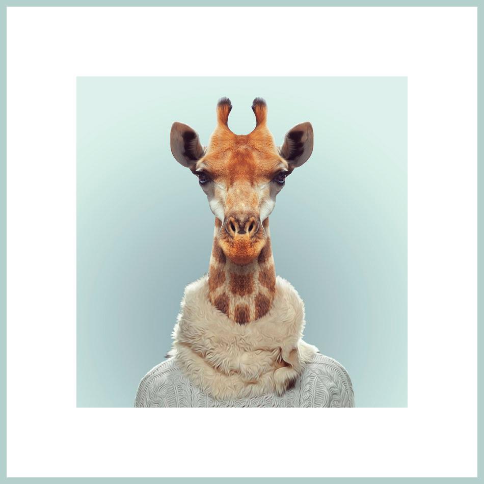 Eine Giraffe mit Schal