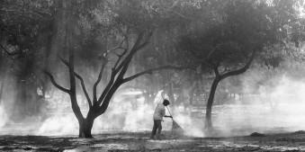 Ein Mann fegt den Boden unter lichtdurchfluteten Bäumen