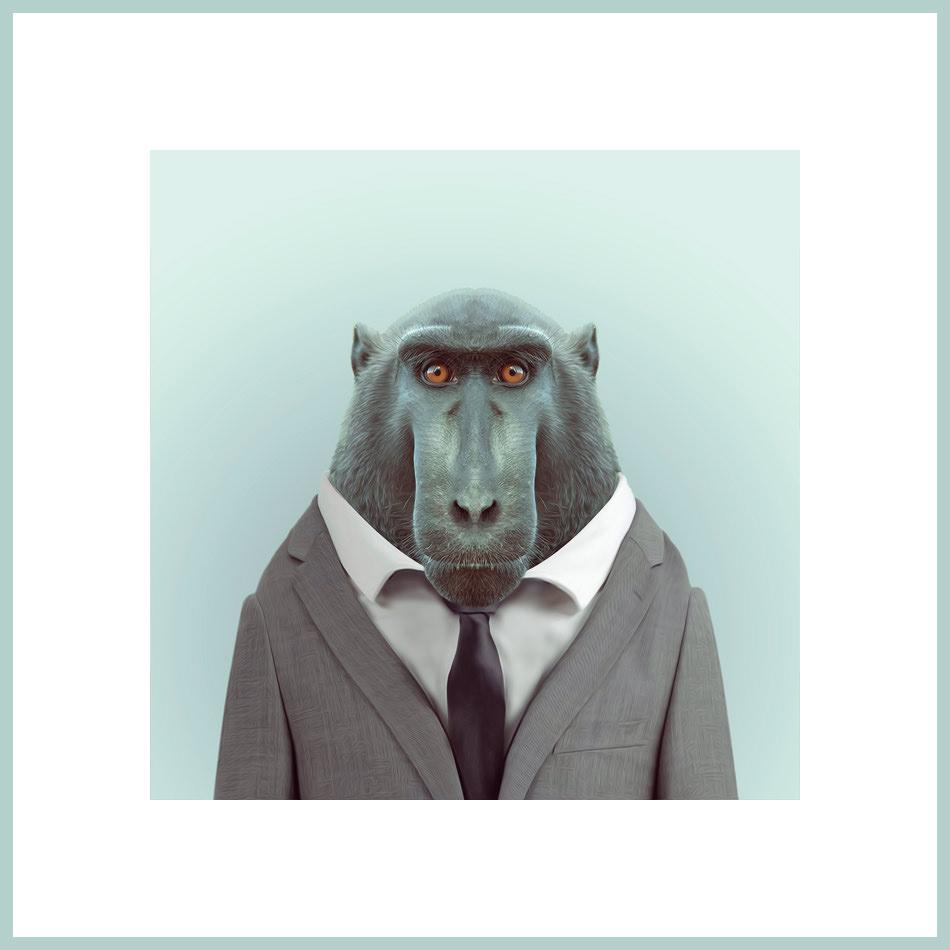 Ein Affe im Anzug