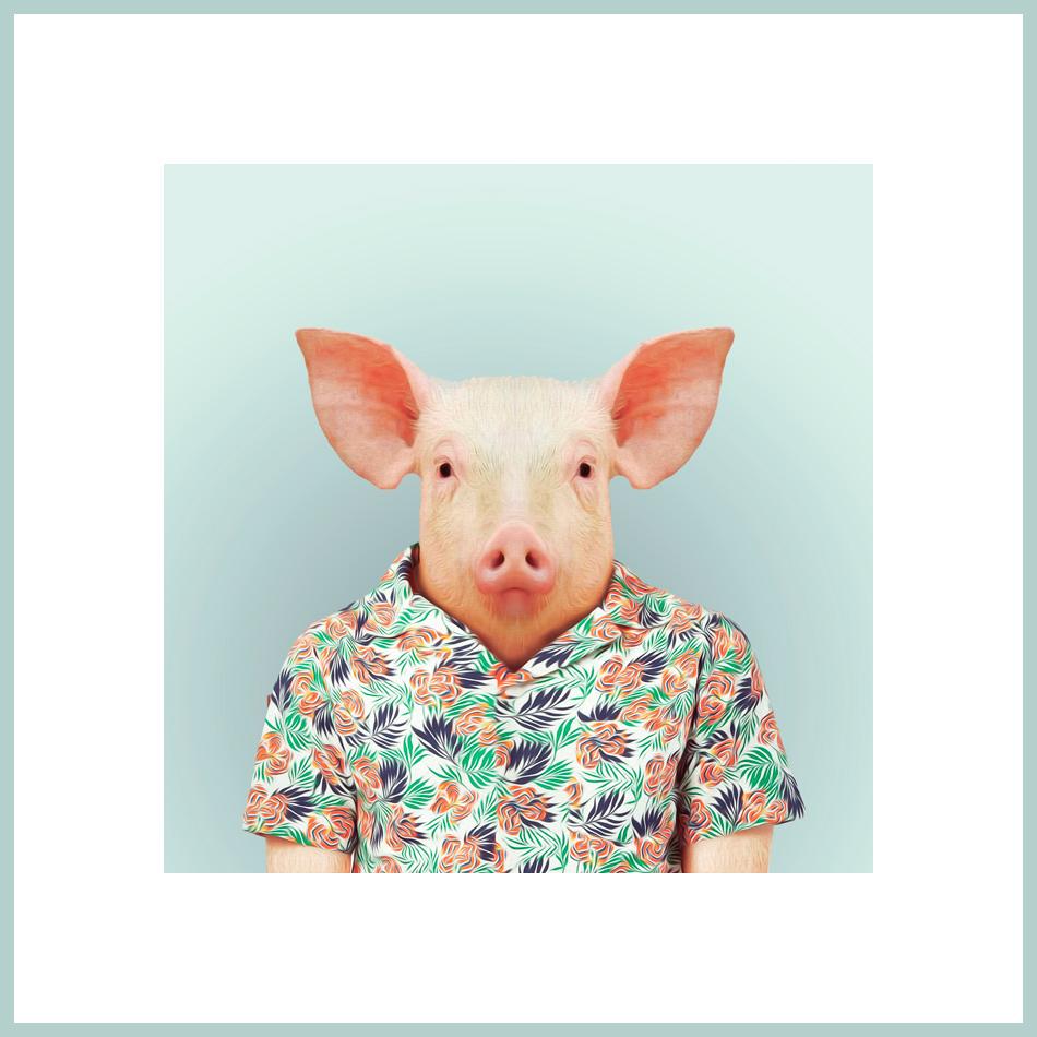 Ein Schwein in einem bunten Hemd