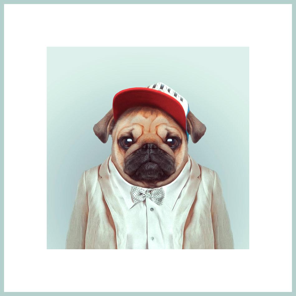 Ein Hund mit Anzug und Baseball-Kappe
